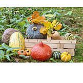 Still life, Squash, Autumn decoration