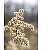 Flower, Seed
