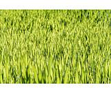 Meadow, Grass, Green