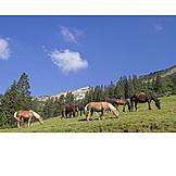 Horses, Mountain Meadow