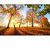 Autumn, Autumn Forest, Sun
