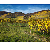 Agriculture, Vineyard, Viticulture