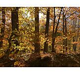 Laubbaum, Herbstfärbung