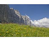 Dandelion Meadow, Karwendel