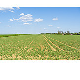 Field, Agriculture, Young Plant