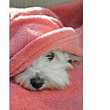 Hund, Verstecken, Decke