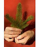 Hand, Fir Branch