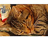 Katze, Schlafen