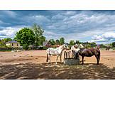Pferde, Pferdehof