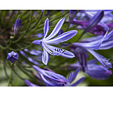 Jewelry african lily