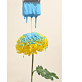 Flower, Painting, Paintbrush
