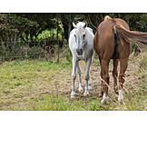Weide, Pferde