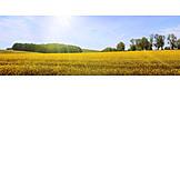 Landwirtschaft, Rapsfeld, Rapsblüte