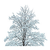 Tree, Winter, Snowy