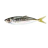 Fish, Prepared Fish, Mackerel