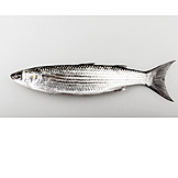 Fish, Mullet