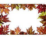 Maple Leaves, Autumn
