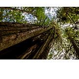Tree, Tree Trunk, Old Tree