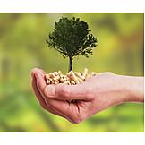 Ecologically, Fuel, Wooden Pellet