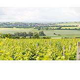 Rhineland-palatinate, Wine-growing Region, Cultural Landscape