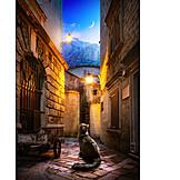Katze, Altstadt, Kotor