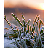 Winter, Frost, Rime