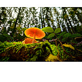 Mushroom, Lamella, Mushroom