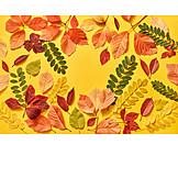 Autumn leaves, Various, Leaf shape