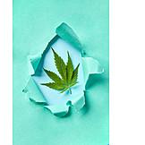 Hanf, Alternative Medizin, Legalisierung
