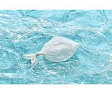 Sea, Fish, Pollution, Plastic Trash