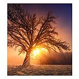 Winter Landscape, Winter Sun
