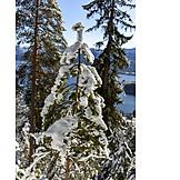 Winter, Conifers, Walchensee