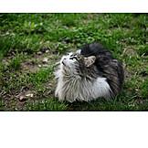 Katze, Hochsehen