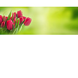 Frühjahr, Tulpenstrauß, Muttertag