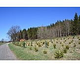 Forest, Forestry, Reforestation