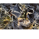 Winter, Leaves, Frost