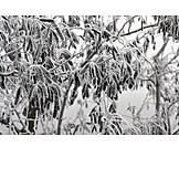 Winter, Frozen, Frost