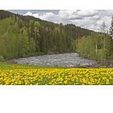 Dandelion, Etna, Oppland