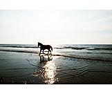 Meer, Pferd, Abendsonne