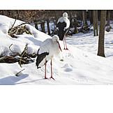 Winter, Stork