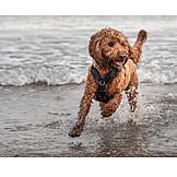 Strand, Rennen, Hund