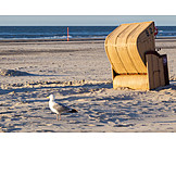 Beach, Herring Gull