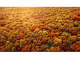 Wald, Herbstwald, Laubwald