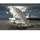 Beach, Bird Feather