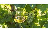 Wein, Weißwein, Weinsorte