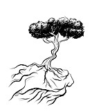Tree, Cliff