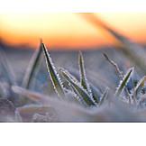 Winter, Grass, Rime