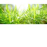 Grasses, Spring