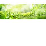 Hintergrund, Wiese, Moos, Frühling