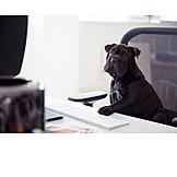 Hund, Boss, Home Office